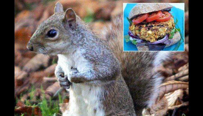 Don't Make Squirrel Burgers